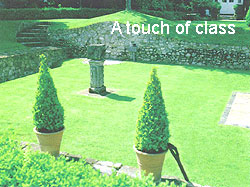 Photograph of an ornamental lawn